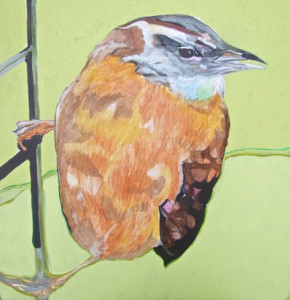 Jamie Downs_Carolina Wren 6x6 72 dpi