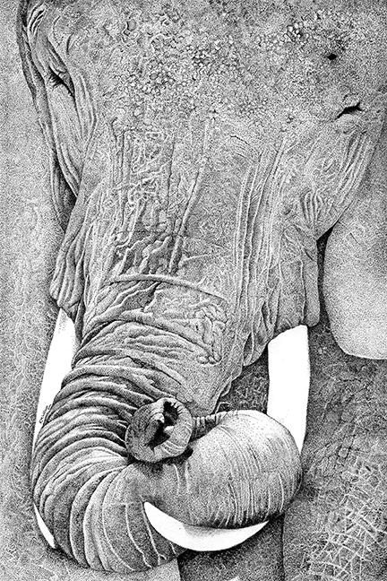 Kathy Wilson smiling_elephant 6x9 72 dpi